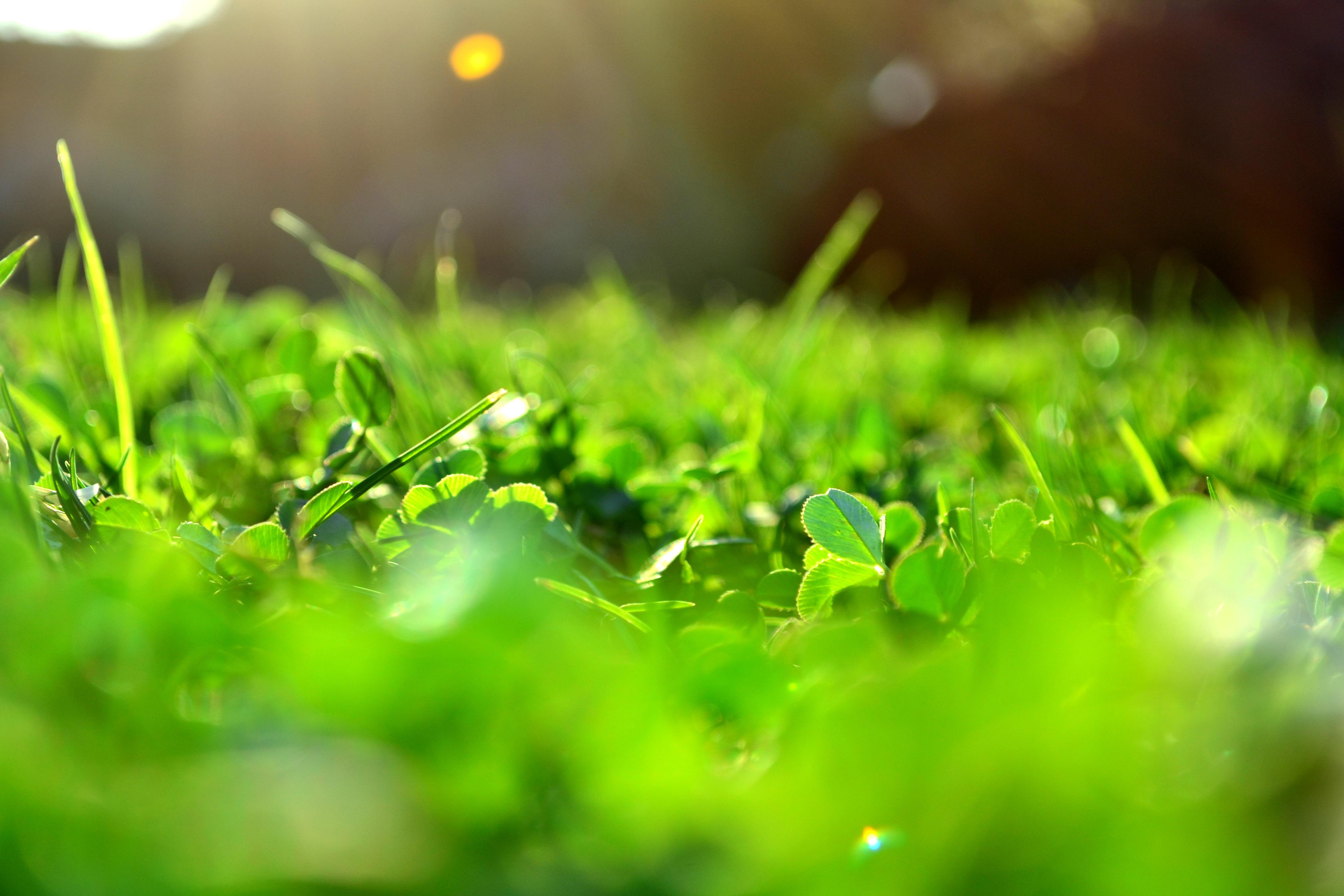 Come fare un prato verde: la preparazione