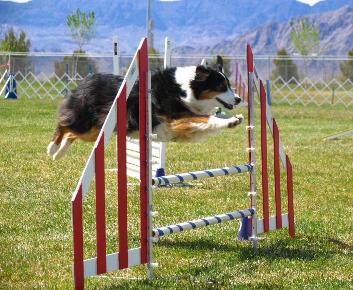 Sport da fare con il cane: l'elenco di quelli più divertenti