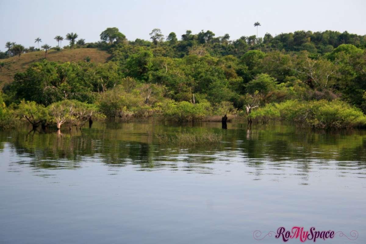 Foresta Amazzonica Panorama