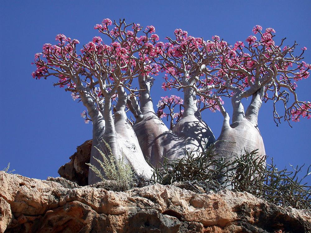 Socotra Yemen