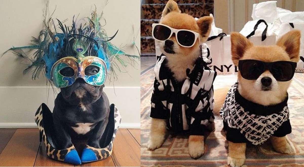 Animali e moda: gli amici a 4 zampe più fashion del web [FOTO]