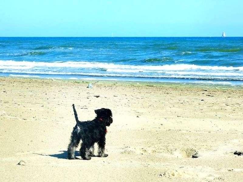 Spiagge per cani: i litorali per i nostri amici a quattro zampe [FOTO]