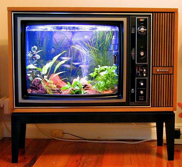 acquario televisore fronte