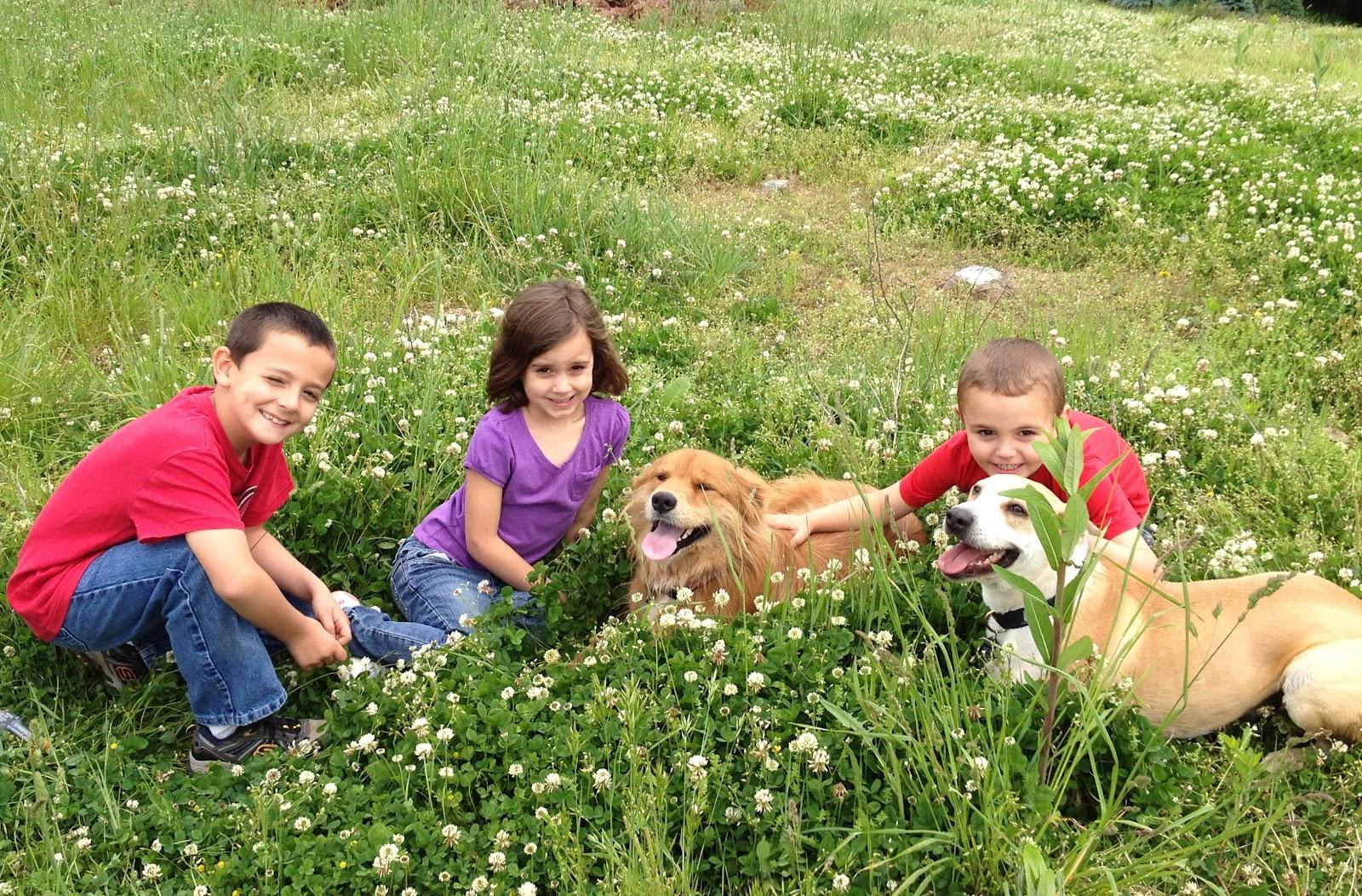 montagna cane bambini prati