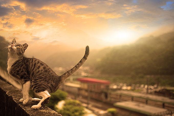 10 posti per gli amanti dei gatti