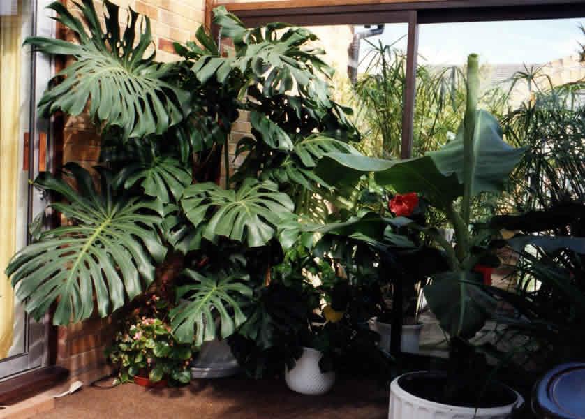 piante umidita