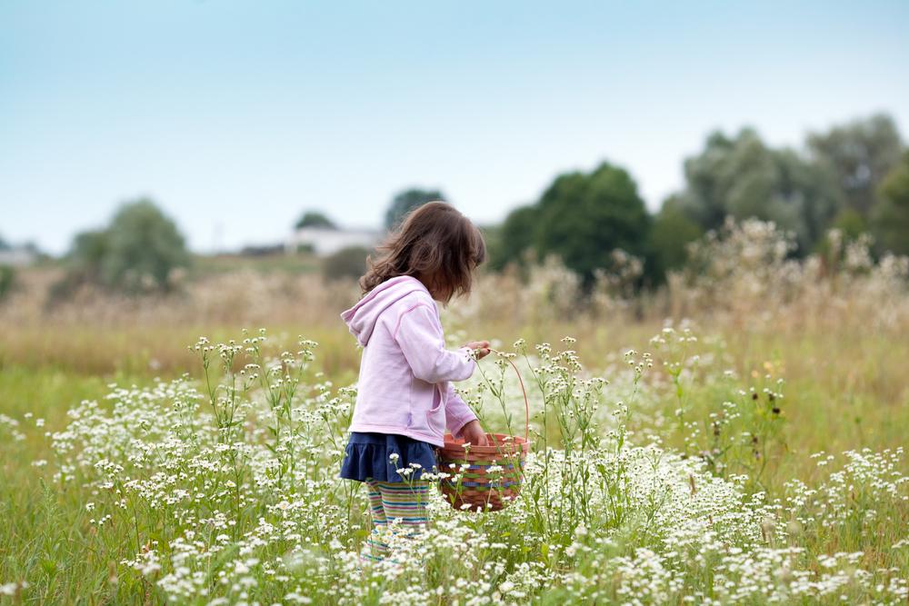 regali fai da te: il cestino di fiori
