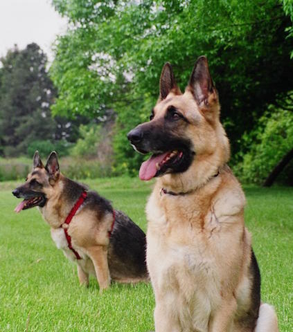 cani giardino manutenzione pulci