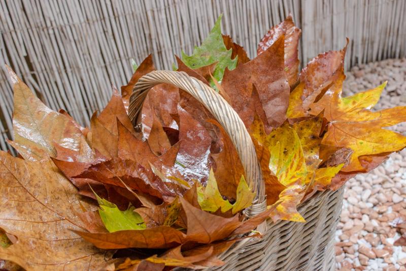 foglie secche con cesto