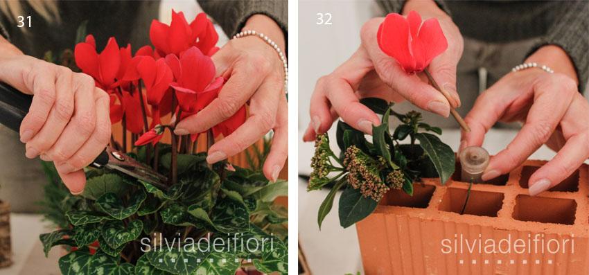 fasi 31 32 fiori di ciclamino