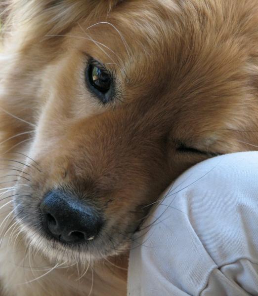 Amore canino