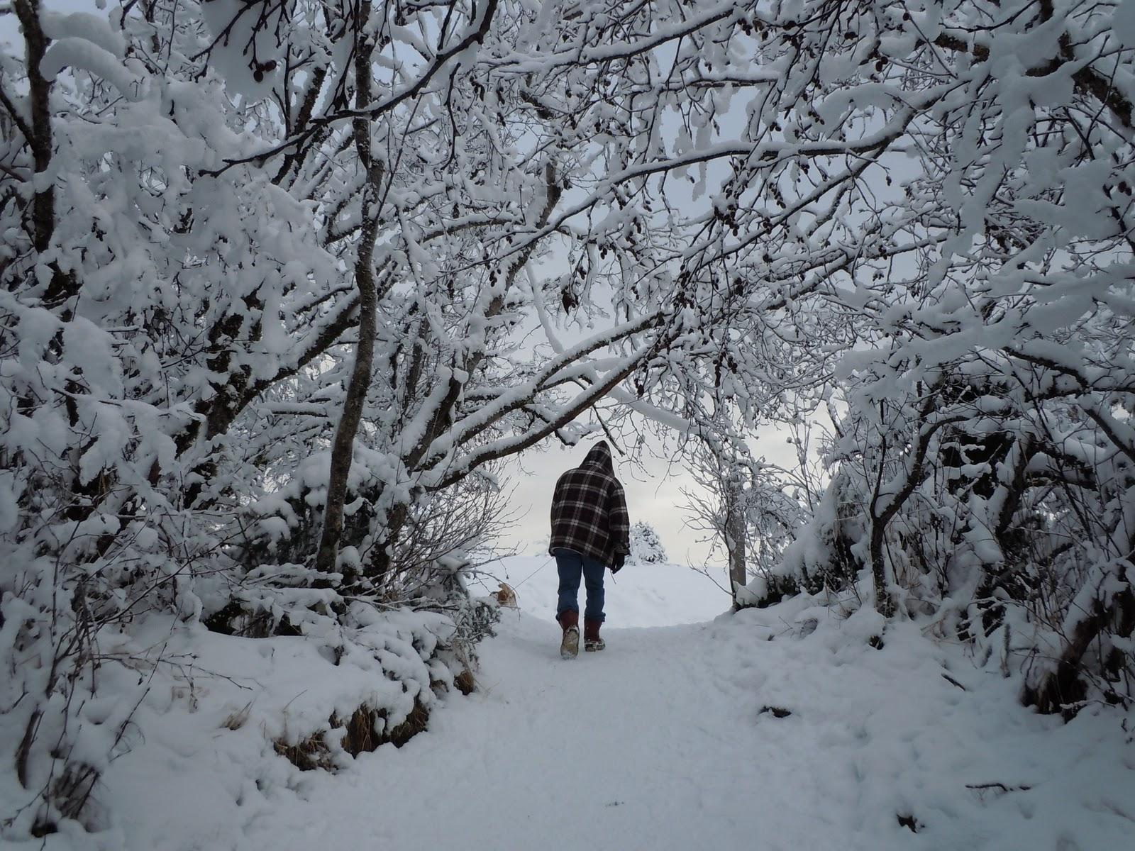 camminata boschi neve