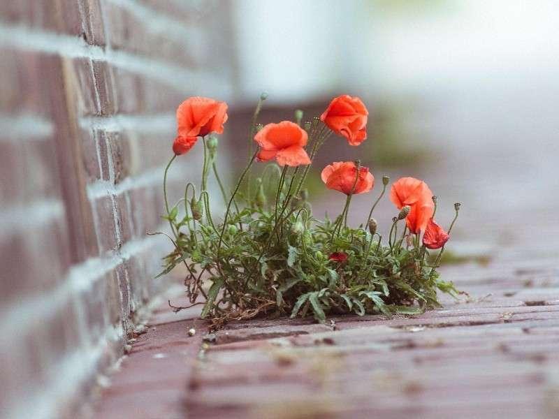 Strade fiorite: le più belle del mondo [FOTO]