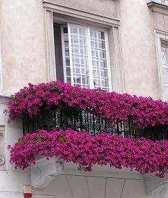 Gerani sul balcone
