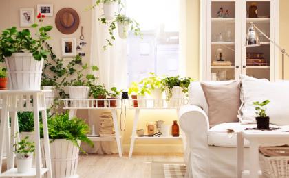 7 piante che hanno bisogno di poca luce