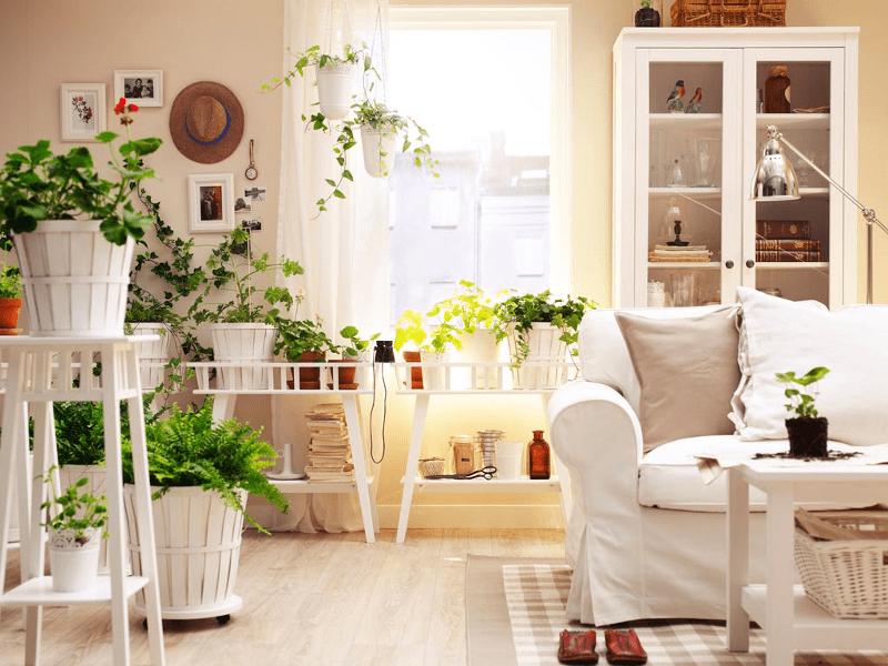 Casa piante