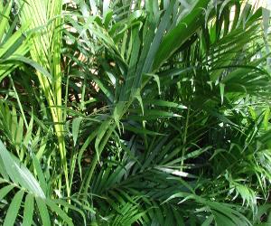 Pianta Ufficio Poca Luce : Piante da interno resistenti simple la sansevieria una pianta