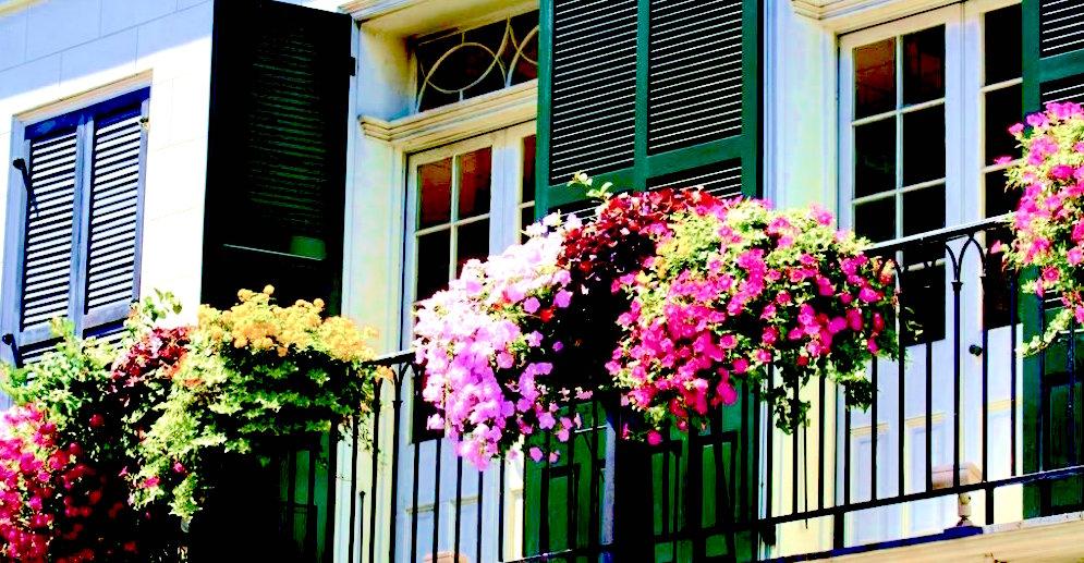 Coltivare gerani balcone