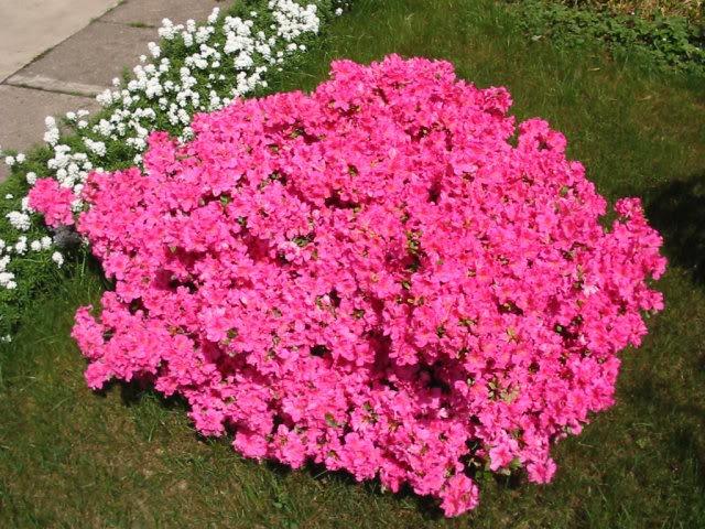 fiori primaverili da giardino l 39 elenco pourfemme