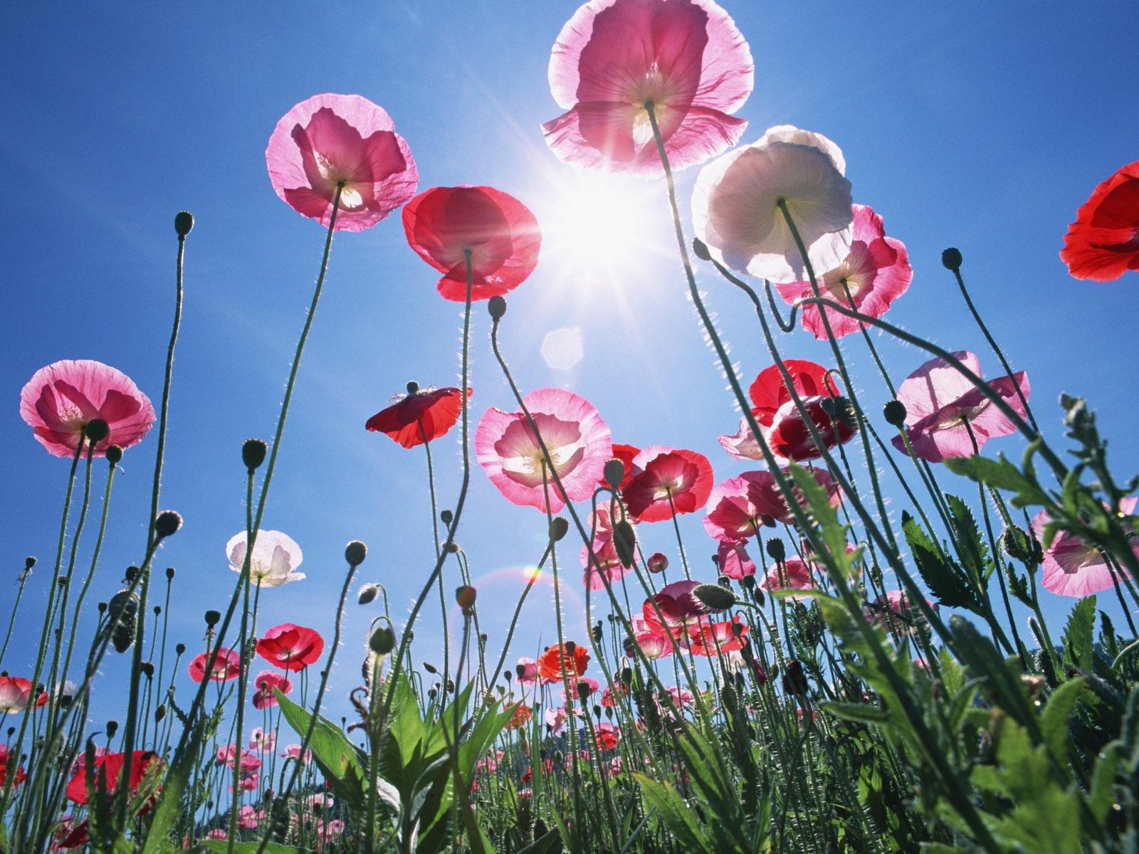 Fiori primaverili da giardino l 39 elenco tempo libero for Fiori primaverili da giardino