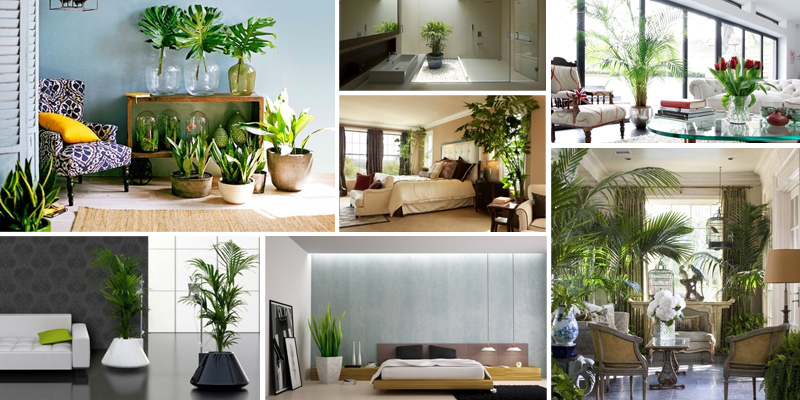 piante arredamento
