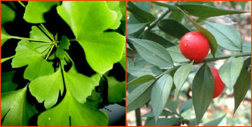 Quali erbe dimagranti preferisci?