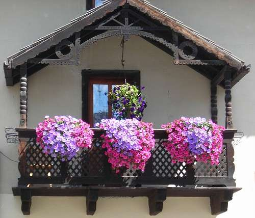 Piante da balcone in ombra: una guida ai diversi tipi [FOTO]