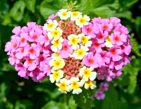 camara fiori gialli e rosa