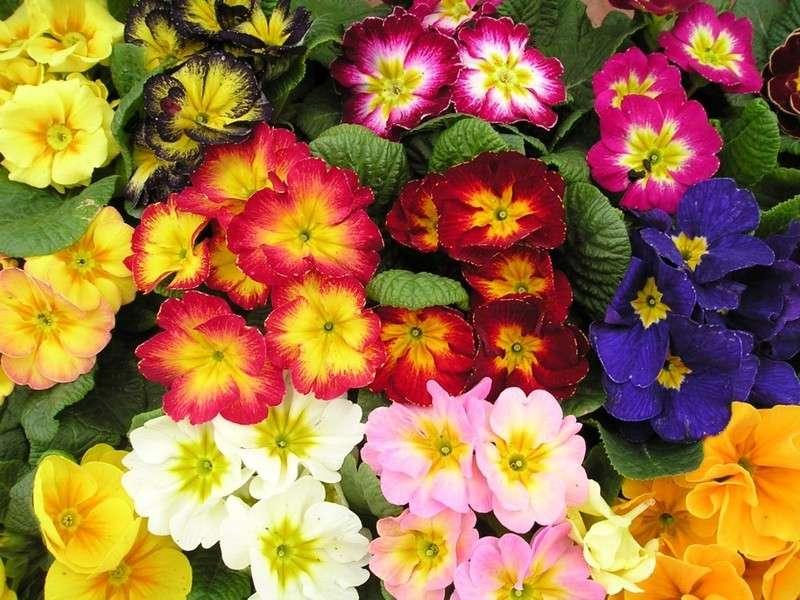 Fiori da giardino perenni e per le diverse stagioni [FOTO]
