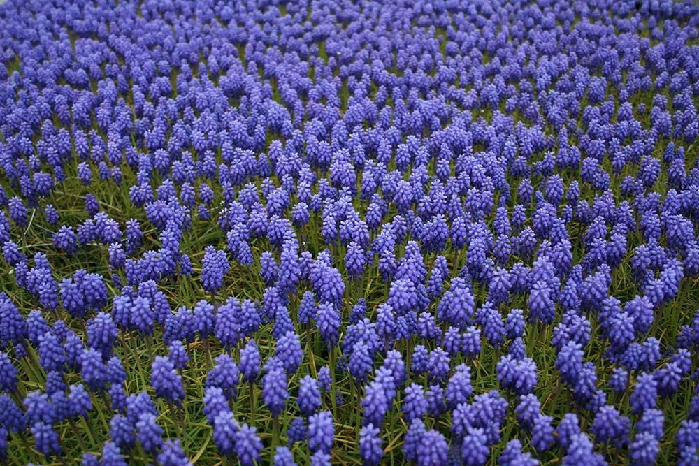 Fiori da giardino perenni e per le diverse stagioni foto for Piante fiorite perenni da esterno