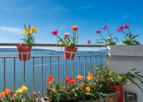 tulipani sul balcone