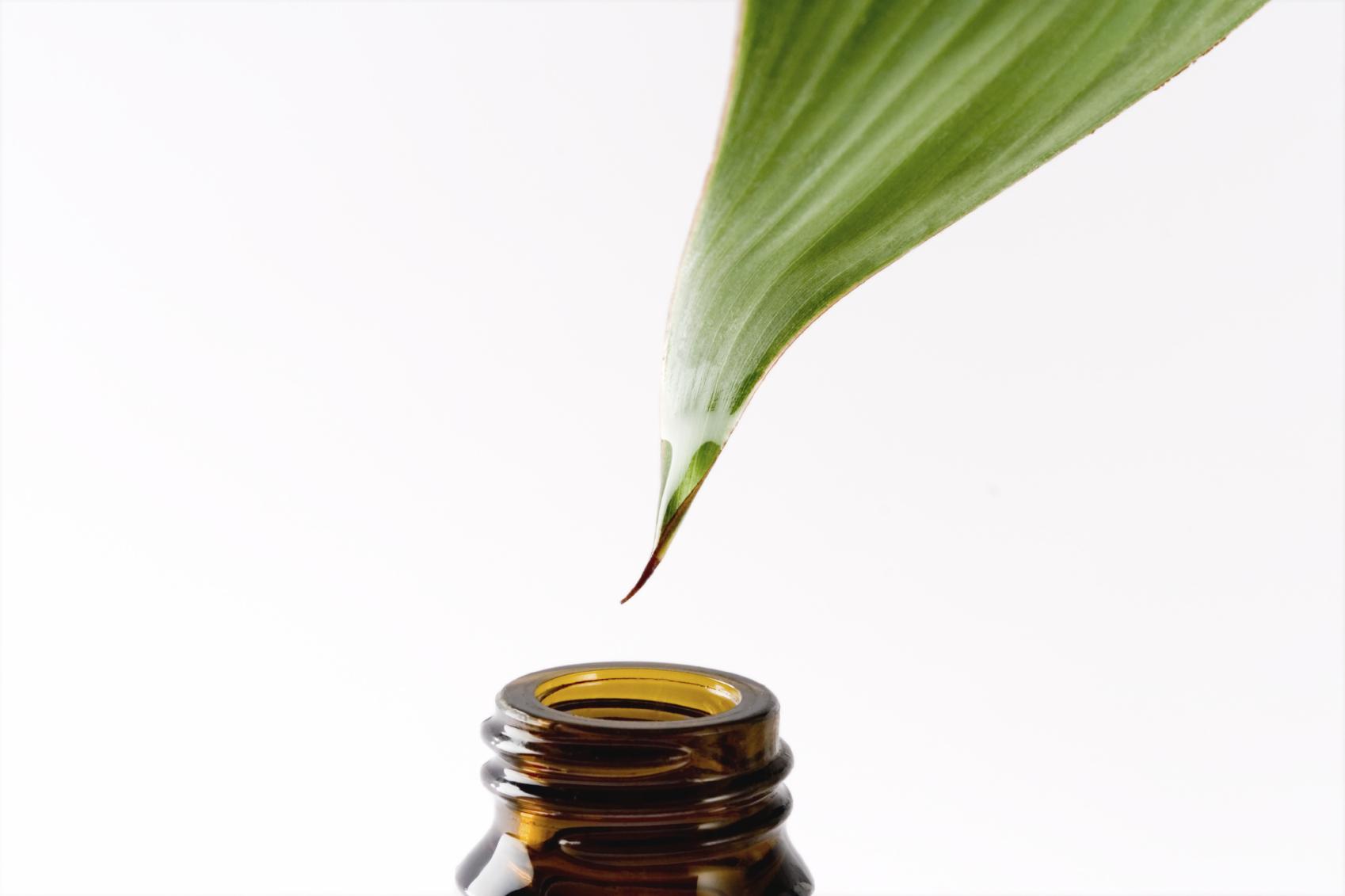 tea tree oil head lice