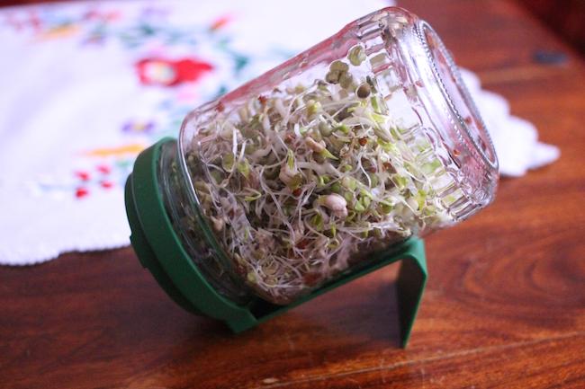 coltivare germogli vaso