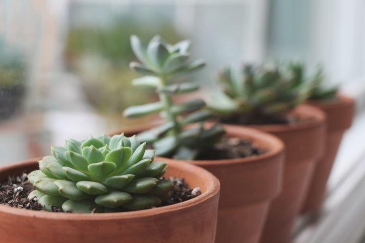piante grasse posizione