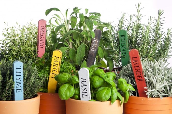 Quanto ne sai sulle erbe aromatiche alleate della salute? [QUIZ]
