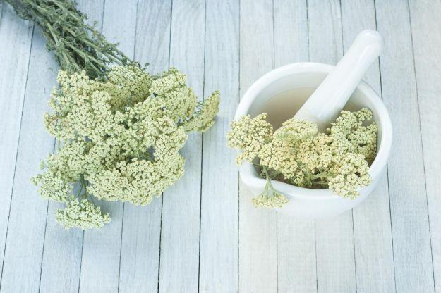 Minestrone con erba livia