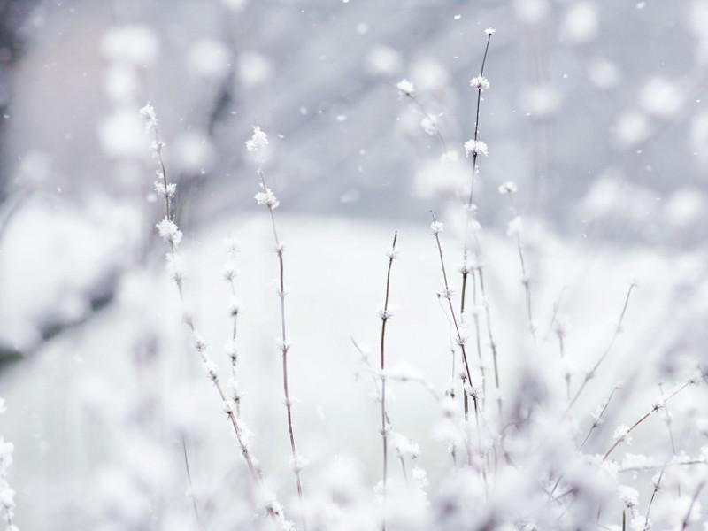 Piante freddo