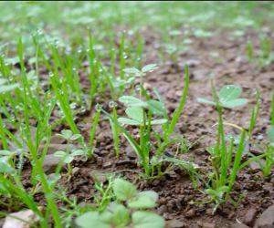 Terreno da fertilizzare