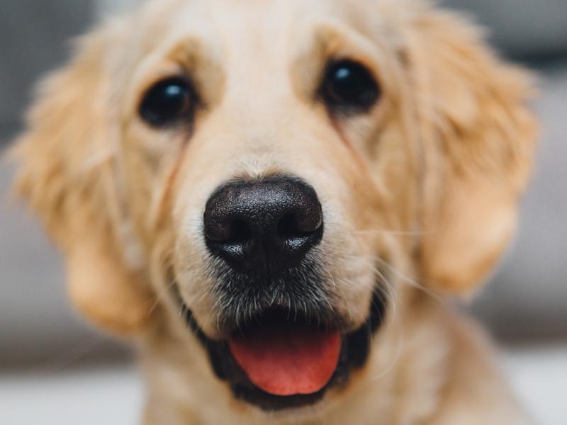 Unghie cani