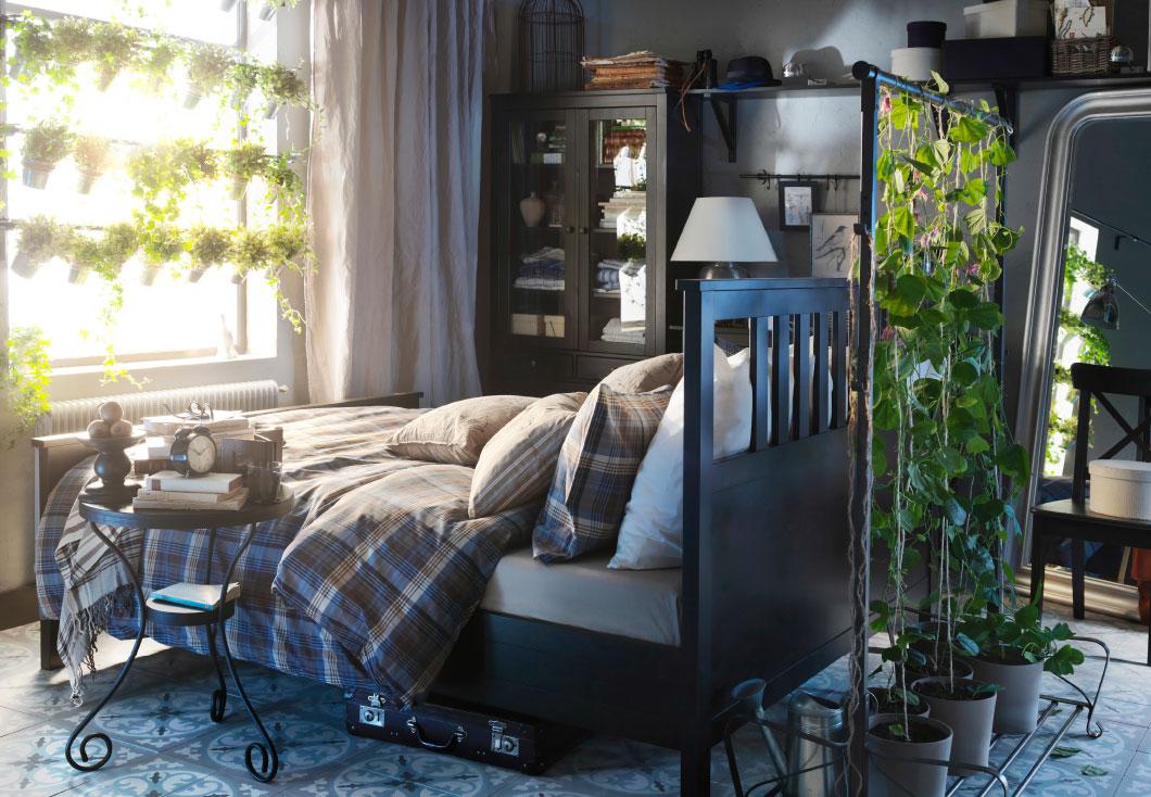 Le 5 piante da tenere in casa per dormire meglio | Pourfemme