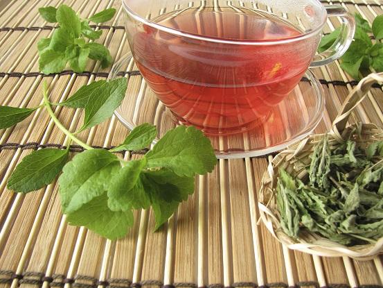 stevia infusione