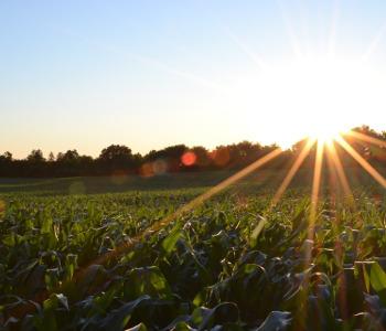 Sole coltivazione