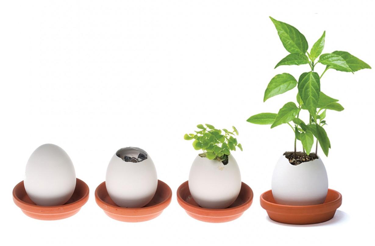 vasi piante uovo