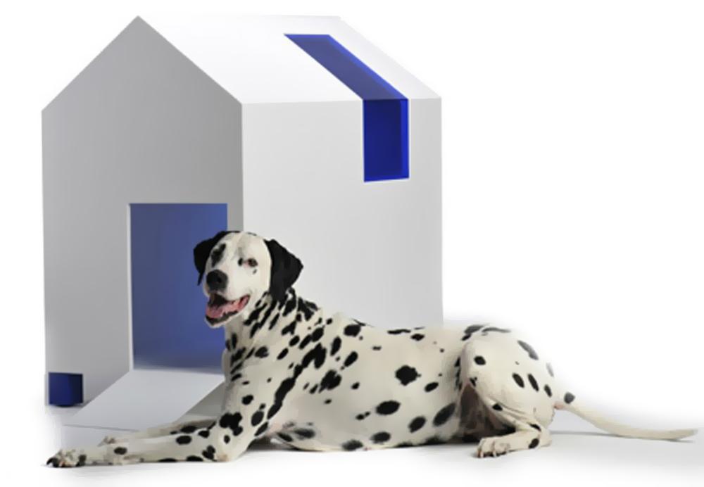 cromo cani