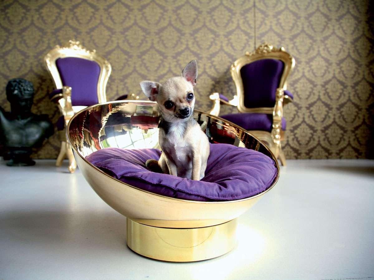 Cucce e letti per cani e gatti: le proposte di design per gli animali domestici [FOTO]