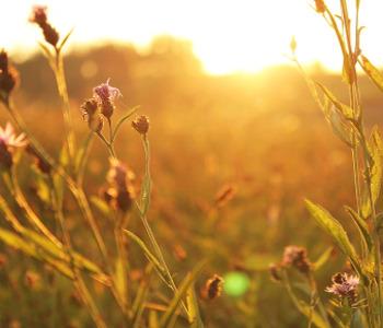 Sole giardino