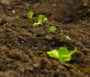 Come coltivare i cetrioli pourfemme - Compost casalingo ...