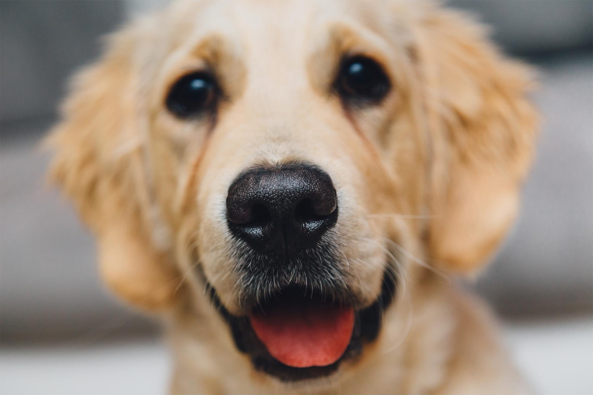 La Pet Therapy: i benefici per la salute della terapia con gli animali