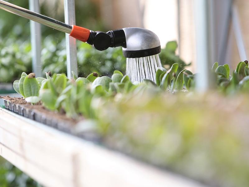 Consigli per innaffiare nel modo corretto le piante