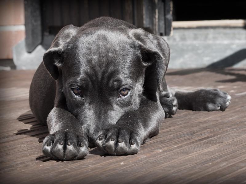 Come pulire le zampe al cane